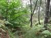 01 furando através da vegetação