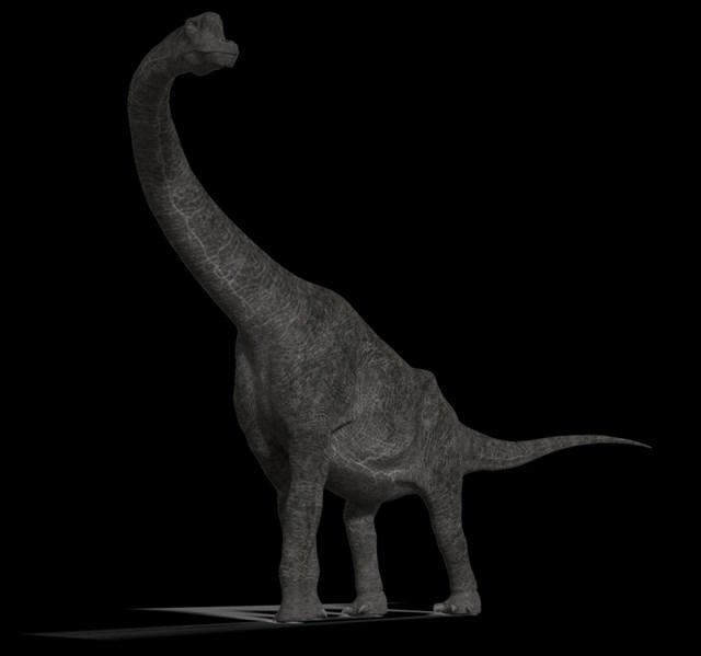 Brachiosaurus nostrils
