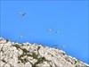 As gaivotas sobrevoavam-nos log image