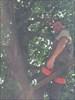 Sur sa branche