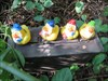 The Gnome Ducks visit OH on the way back to MI.