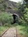A vegetação à sombra do túnel
