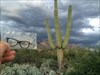 Watching the storm roll in over the Catalina Mnts. Tucson, Arizona