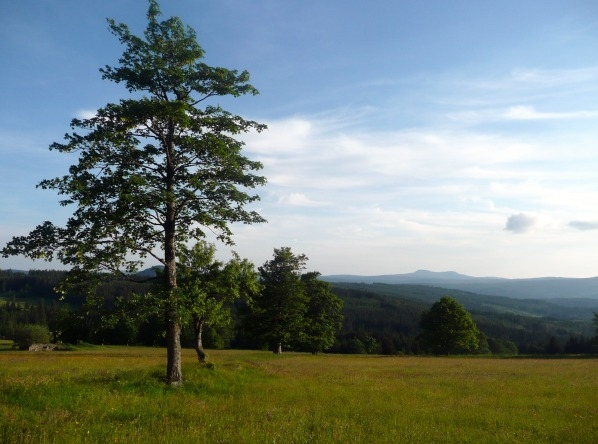 Stromy, jedny z mála pozůstatků po Zhůří