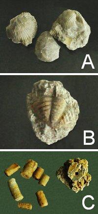zkameneliny
