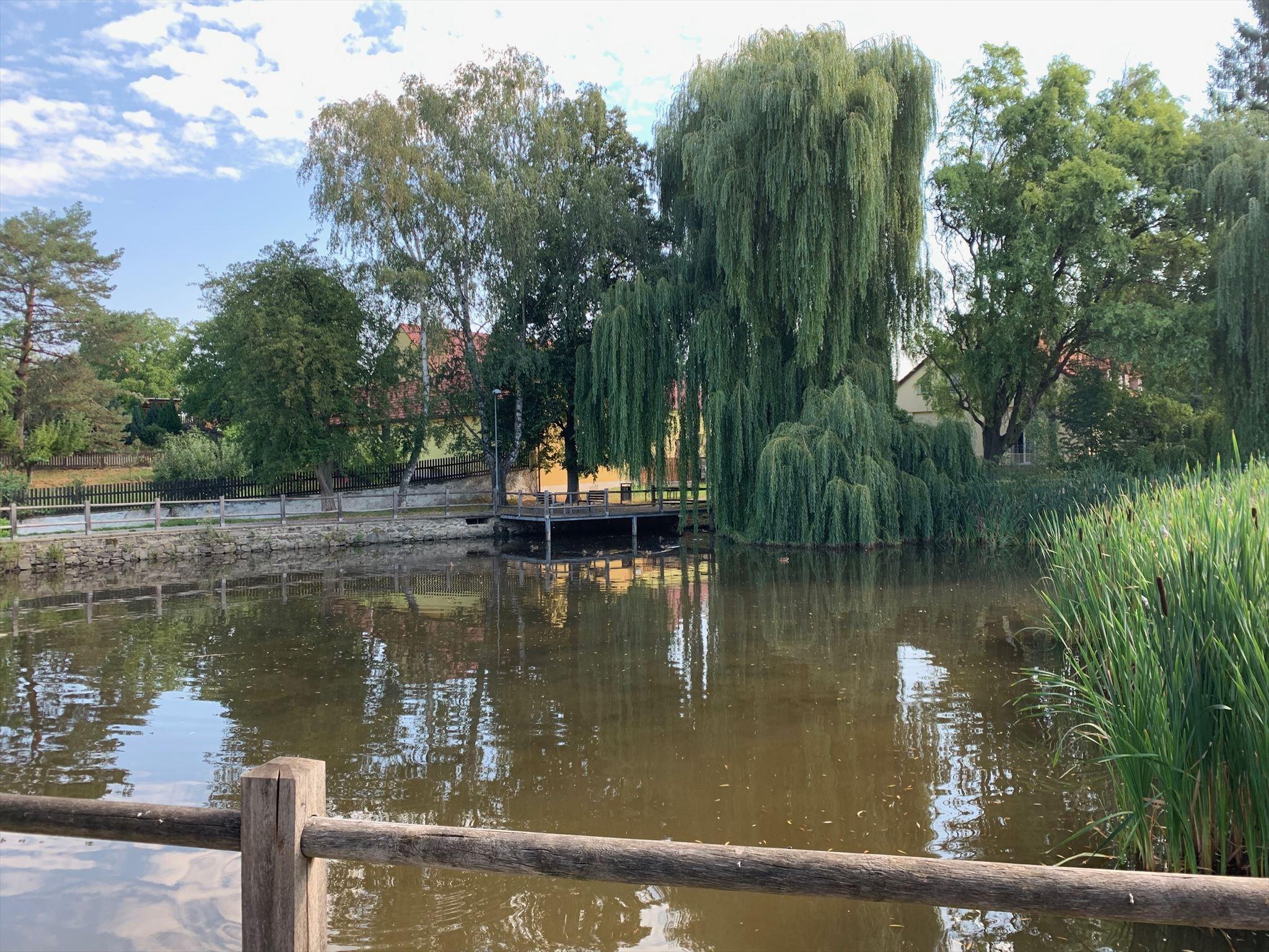 Návesní rybník ve Lhotě