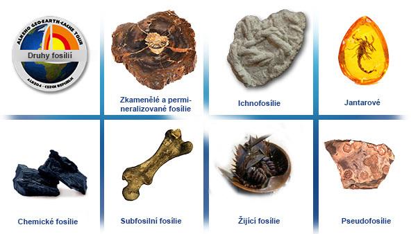 jaké jsou dva typy fosilií
