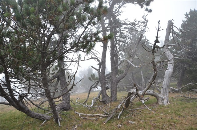 arbre pour cacher vis a vis arbre pour cacher vis a vis arbres et arbustes arbustes planter. Black Bedroom Furniture Sets. Home Design Ideas