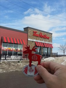 Canadian moose wants to see the world !