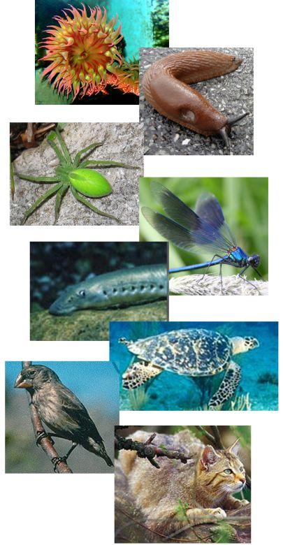 Naturphänomen