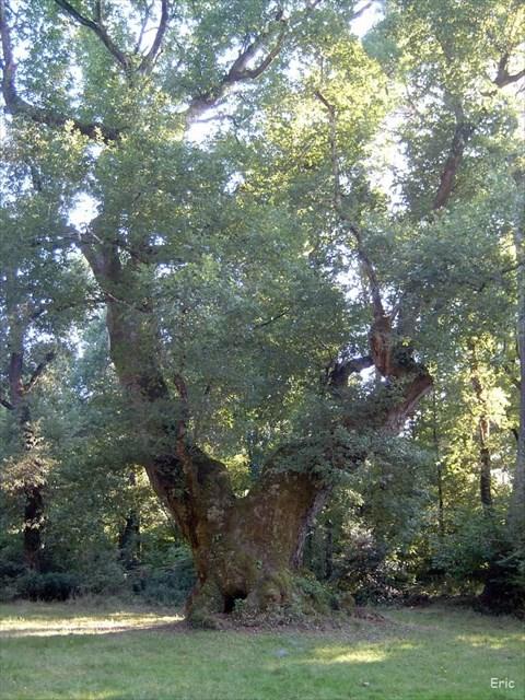 geocaching france � afficher le sujet les arbres