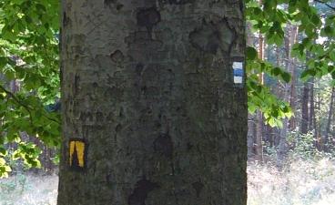 Znacky / Signs