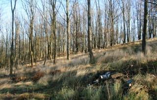 Listnate lesy