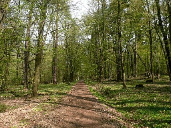 Cesta napric pralesem