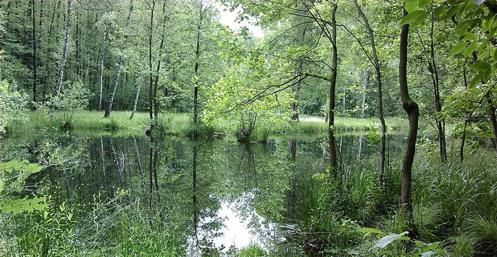 Přírodní krajinná oblast Kamenec