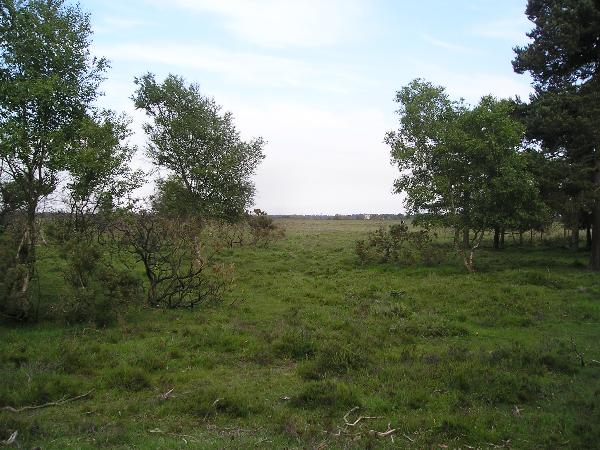 View from the Cache