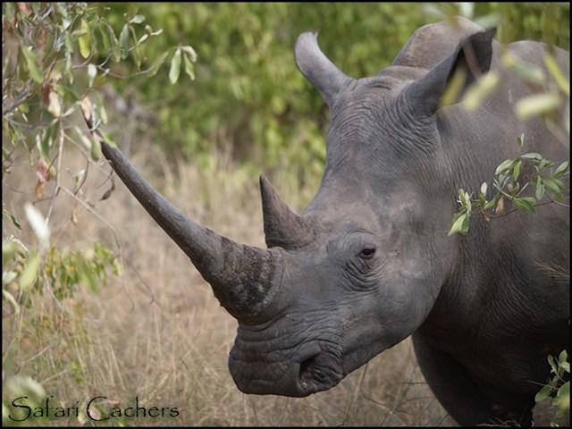 R Rhino Usage Warning GC6C2QF Big Five Safar...