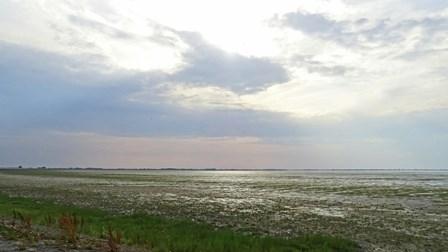 Schorren langs de Balgzanddijk