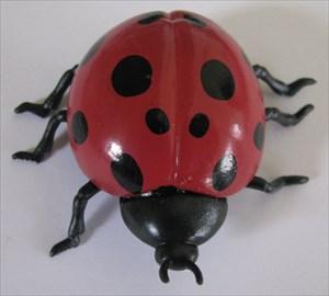 Lake Erie Ladybug (13)