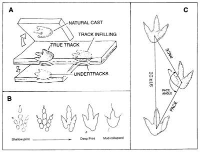 Mins 24 Valve Wiring Diagram
