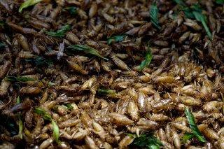 Cvrčci vrychlém občerstvení