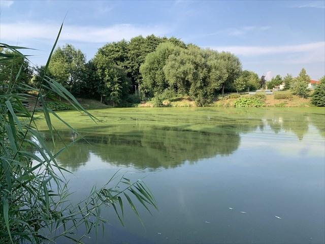 Mlynářský rybník