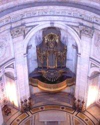 Organ / Orgão