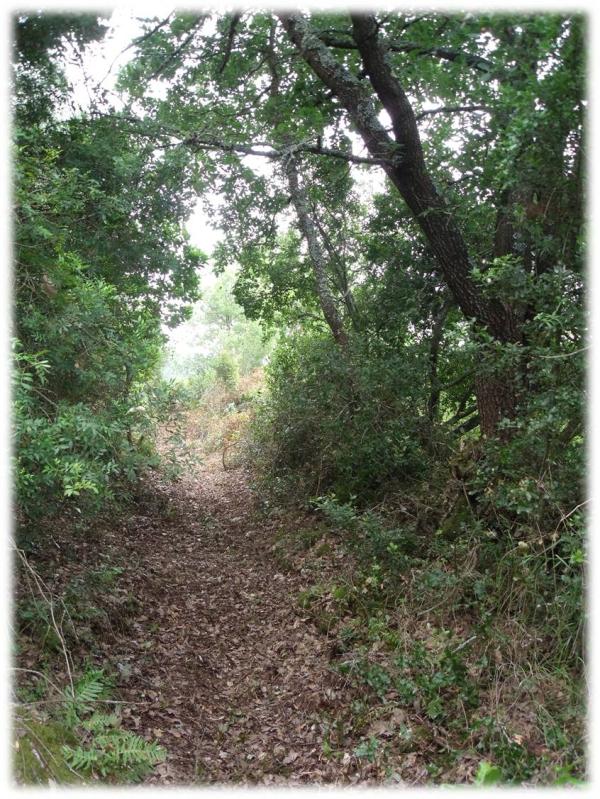 Trail, percurso aberto 1