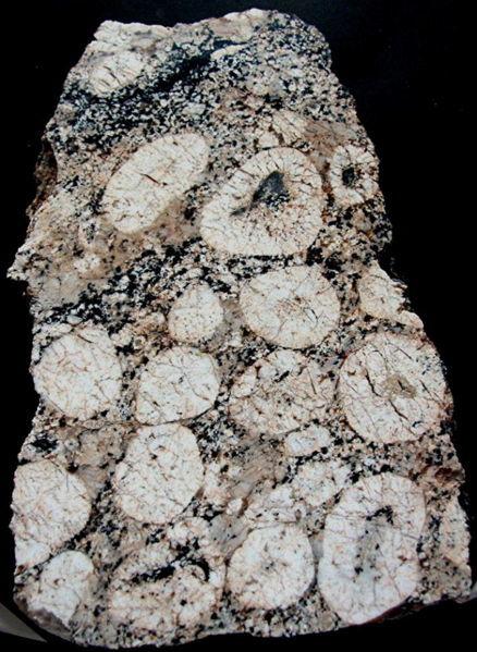 Granite orbiculaire à couche simple de Porspoder dans le Finistère.