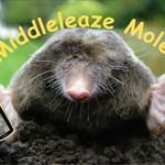 Middleleaze Moles