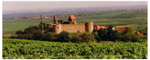 Burg Neuleiningen.jpg