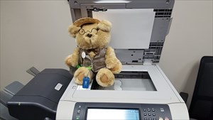 Orville, Office Bear, is hard at work!