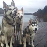 Team-Wolfpack