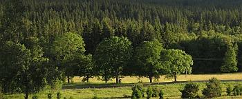 Stromy pod silnicí