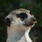 quenrelia