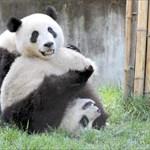 Panda Inc