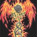phoenix-rose