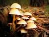 Cogumelos log image