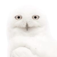 avatar de Allierla