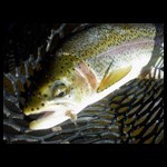 Intermountain Angler