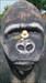 At Gorilla Stash
