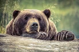 avatar de Bearkriss