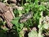 03 besouro 1