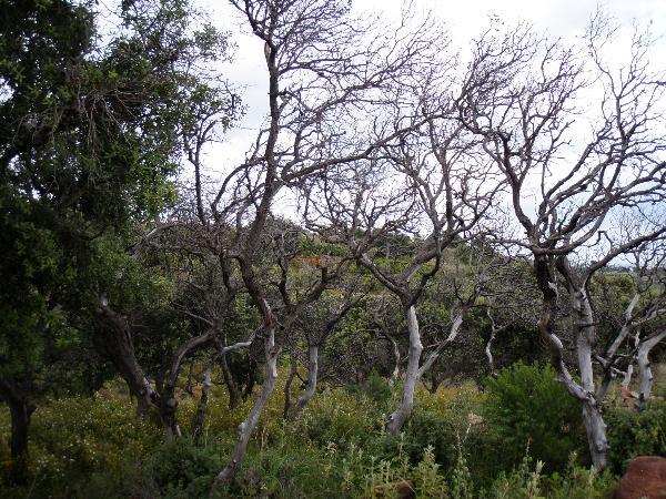 Àrvores secas