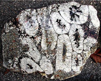 Granite orbiculaire simple couche montrant des orbicules déformés, de Janaillat dans la Creuse.