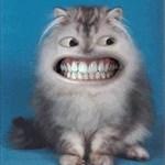 okcacats