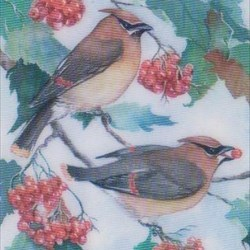 Waxwing pair