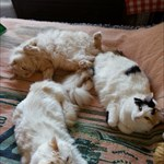 Pattycat