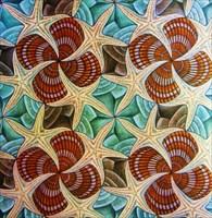 ShellsStarfish