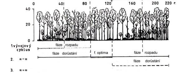 Schema vyvojovy cyklus lesa